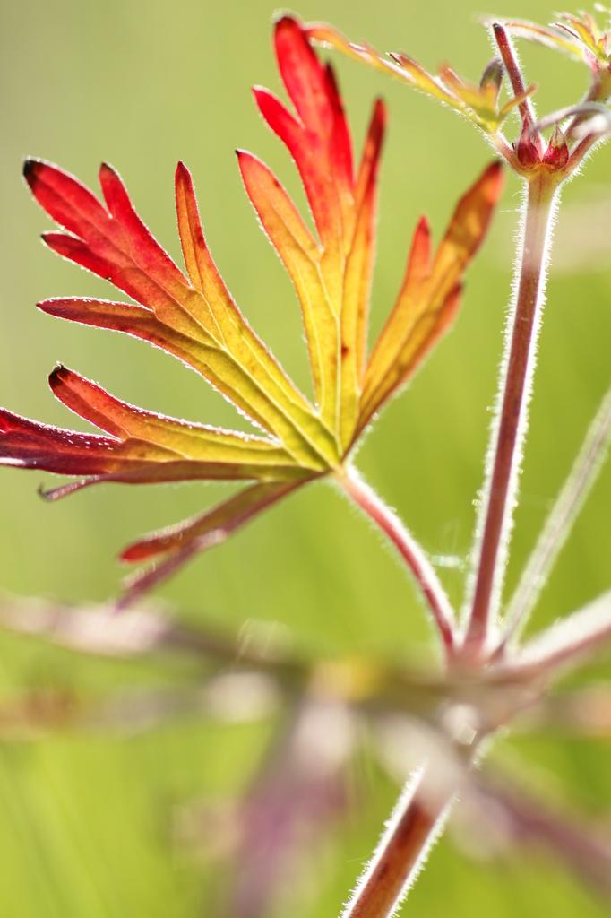 可愛い葉っぱ