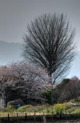 春のワンショット