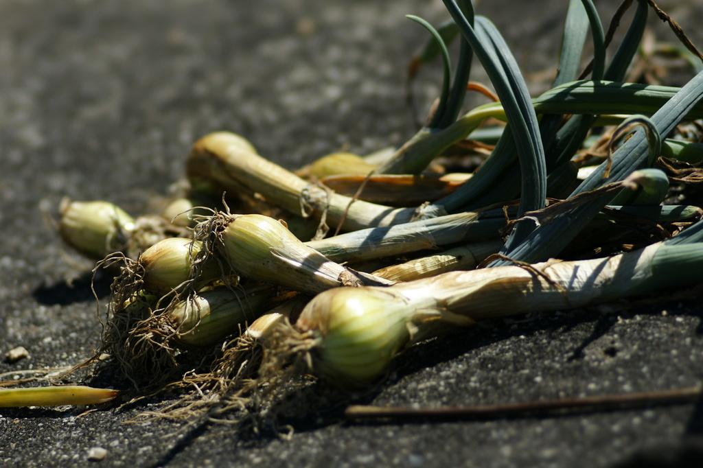 間引き野菜