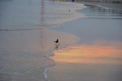 デイトナビーチで千鳥足