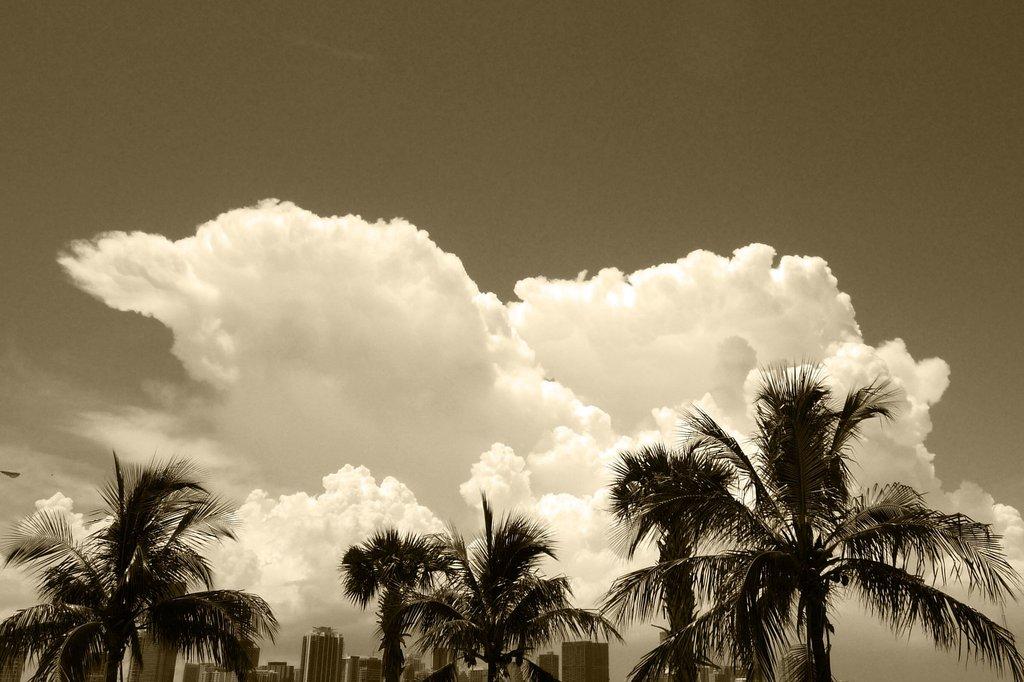 Biscayne Bayから見るマイアミダウンタウン
