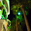 Palm Tree in Las Olas