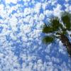 あの雲に乗ってタンパまでやってきた