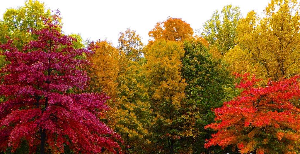ヴァージニアの紅葉