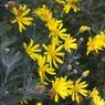 CANON Canon EOS Kiss Digital Xで撮影した植物(IMG_3375)の写真(画像)