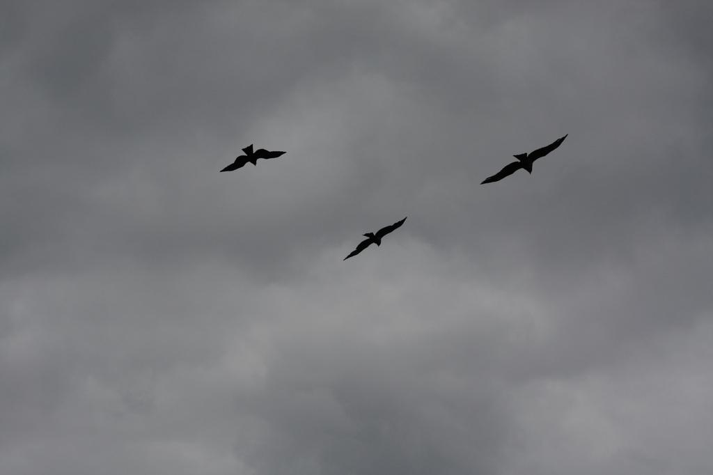 トンビ飛行隊