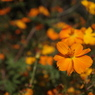 CANON Canon EOS Kiss X2で撮影した植物(公園で)の写真(画像)