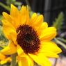 CANON Canon EOS Kiss X2で撮影した植物(庭先)の写真(画像)