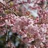 CANON Canon EOS Kiss X2で撮影した植物(板橋区大原町)の写真(画像)