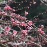 CANON Canon EOS Kiss X2で撮影した植物(埼玉県皆野町)の写真(画像)