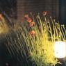 CANON EOS55で撮影した植物(MP610で取り込み)の写真(画像)