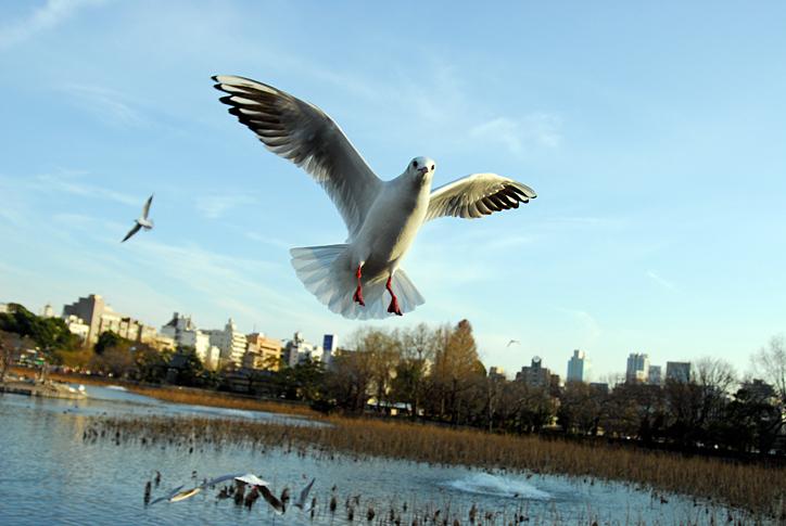 sinobirds
