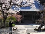 鎌倉花姿(妙本寺)