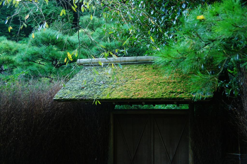 鎌倉秋色情報Ⅵ(東慶寺)