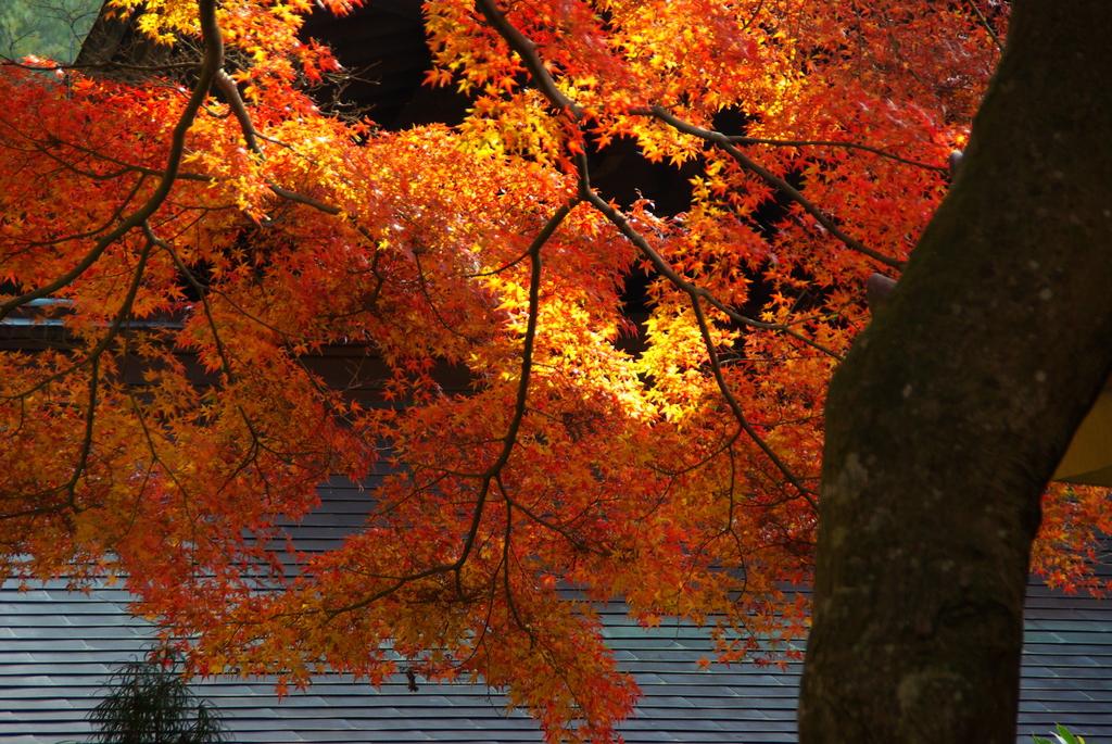 2007秋紅葉瑞泉寺
