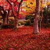 201011紅敷き詰め 圓光寺