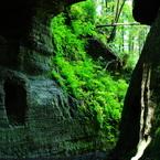 PENTAX PENTAX K20Dで撮影した植物(この緑 源氏の長(おさ)も 眺めしや )の写真(画像)