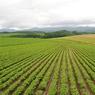 PENTAX PENTAX *ist DSで撮影した植物(想い出の北海道8(2006/7))の写真(画像)