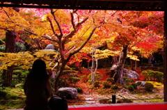 思い出に残る(2010/11撮影 京都 圓光寺)