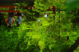 水辺の季節(緑揺心揺)
