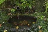 水の流れ ときの流れ