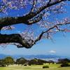 大空に 飛び出しそうな 桜かな
