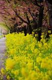 春は近いね