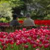 春日(はるひ)の想い出