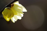 春の予感Ⅰ