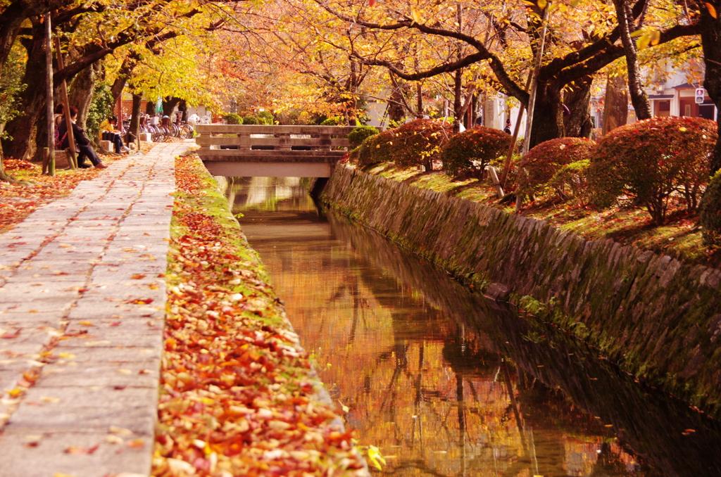 「哲學之道 秋」的圖片搜尋結果