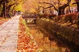 201011秋 歩きたい 哲学の道