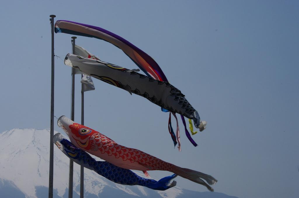 鯉のぼり 富士をバックに 深呼吸