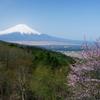 二十曲峠にも春(2009年4月)