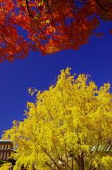 秋深まりゆくⅨ(街角の紅葉)