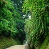 萩の坂 若かりし頃 想い出し 鎌倉萩情報Ⅱ(ご参考)