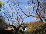 鎌倉花姿(報国寺)