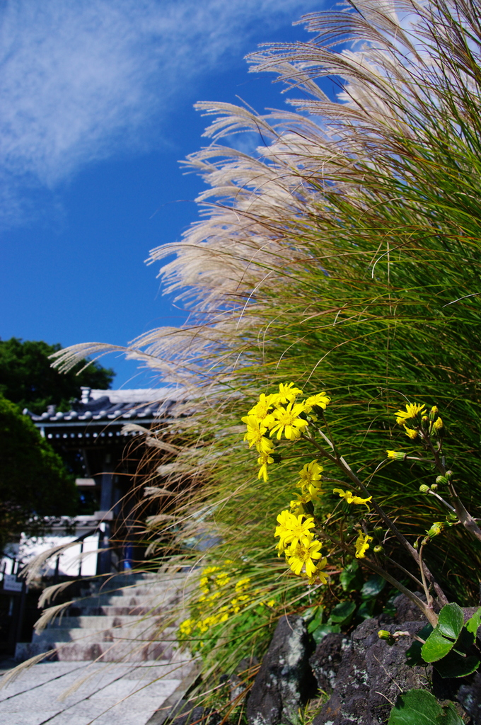 紅葉前 秋の二色 楽しみて(鎌倉安養院)