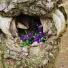 木室の花壇