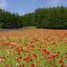 PENTAX PENTAX *ist DSで撮影した風景(想い出の北海道5(2006/7))の写真(画像)