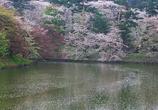 200804弘前城址公園花いかだ