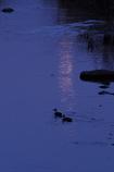 月光を泳ぐ