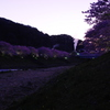 薄暮の桜(2010/2撮影)
