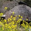山里の春Ⅱ