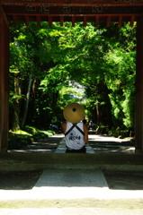 古都の梅雨明けⅡ寿福寺(先客)