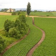 PENTAX PENTAX *ist DSで撮影した風景(想い出の北海道11(2006/7))の写真(画像)