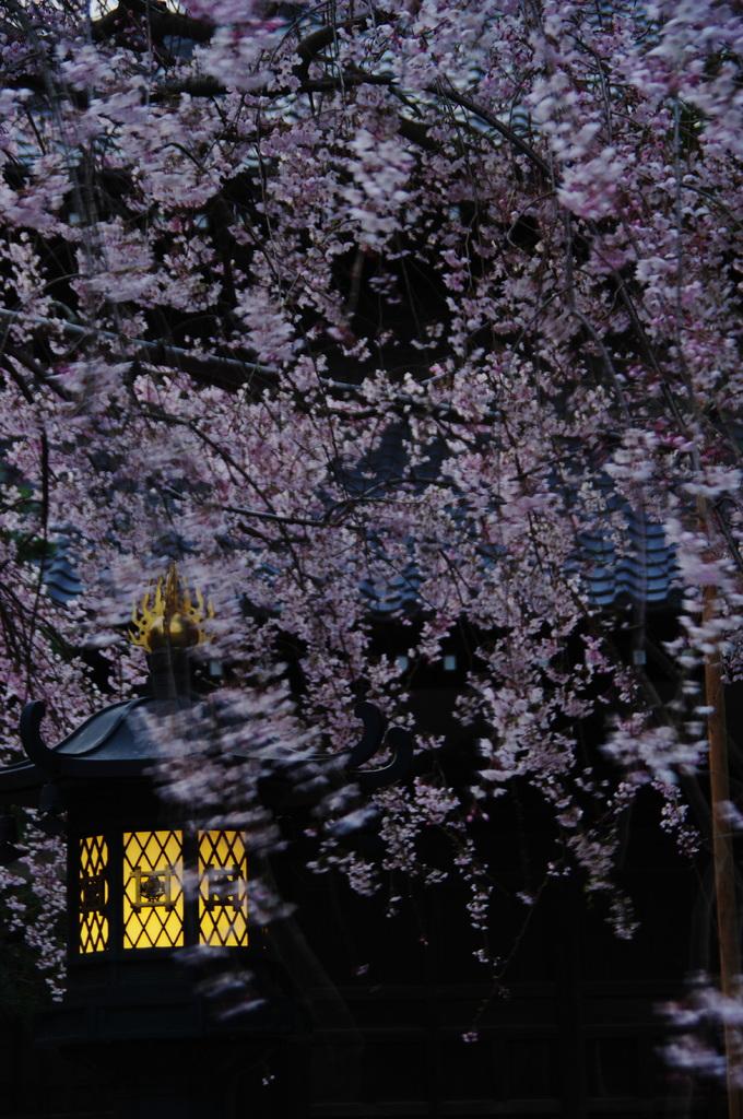 春の宵 やさしく咲きて たれをまつ