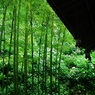 PENTAX PENTAX K20Dで撮影した植物(移り行く それもまた好し 七変化:紫陽花開花情報)の写真(画像)