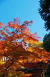 鳳凰の 羽ばたくように 紅葉もえ(2010年卓上カレダー12月分β版)