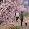 春木径のお散歩