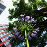 PENTAX PENTAX K20Dで撮影した植物(立ち姿 紫の君に ふさわしく)の写真(画像)